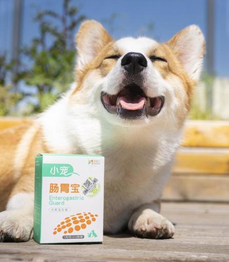 守护狗狗肠胃健康,你需要这么一款肠胃宝